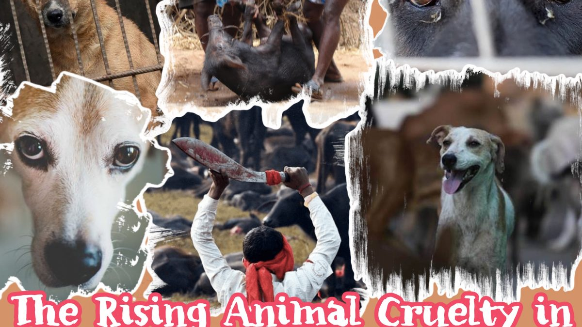 The Rising Animal Cruelty in India, How Did we Get Here?